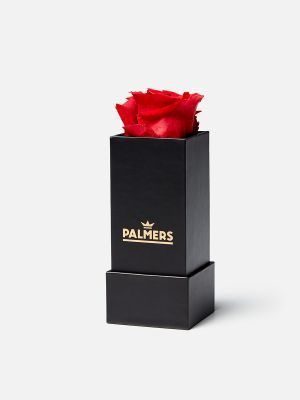 Palmers Rose - Merchandise - Rot
